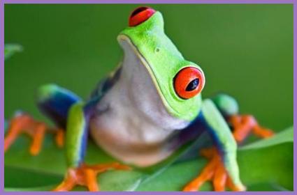 rsz_frog_border8